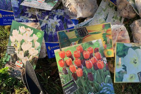 Bunte Blütenpracht für Gesamtschule Edertal – Schülerinnen und Schüler pflanzen 600 Blumenzwiebeln